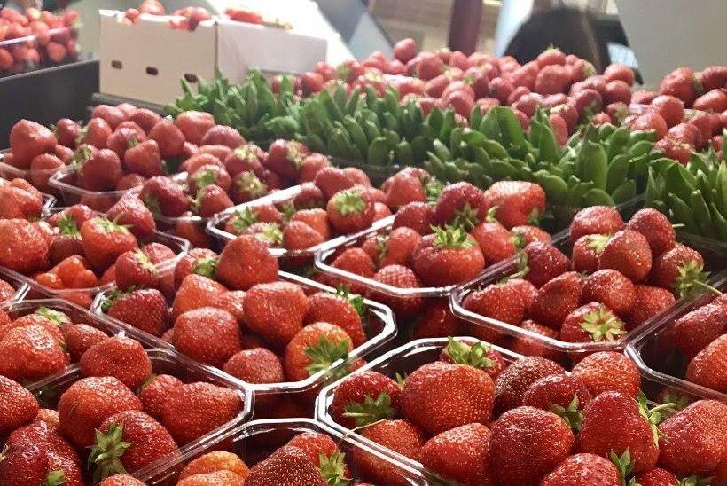 Maasikahooaeg algab: peale koogiküpsetamise pane marju ka sügavkülma