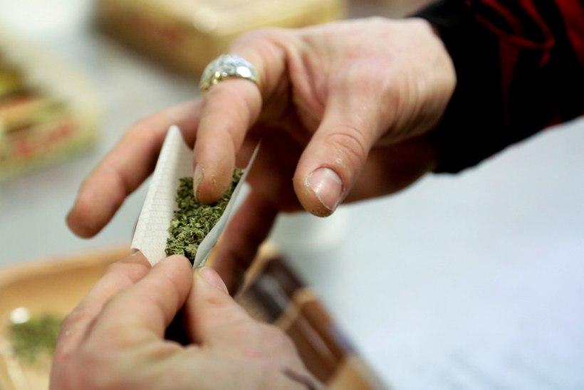 Uruguays saab alates tänasest ametlikult marihuaanat osta