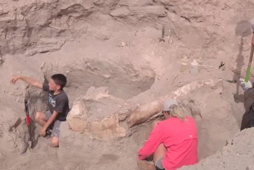 New Mexicos leidis 10aastane poisike haruldase eelajaloolise looma fossiili