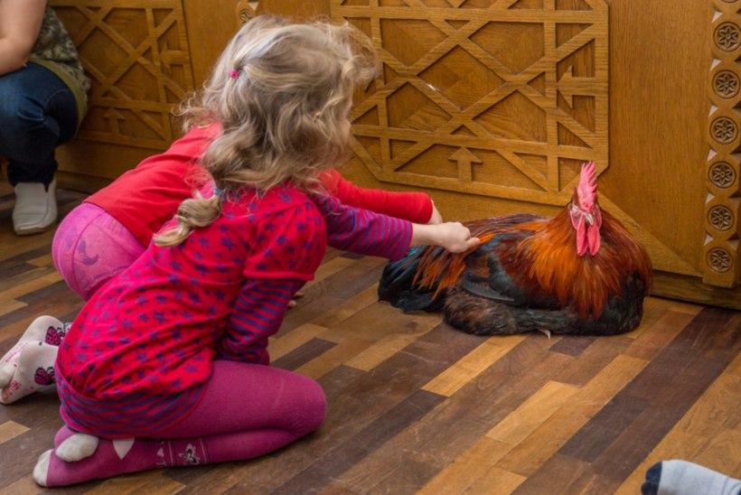 Lugejad avaldavad arvamust: kas laps peaks teadma, kust tuleb liha?
