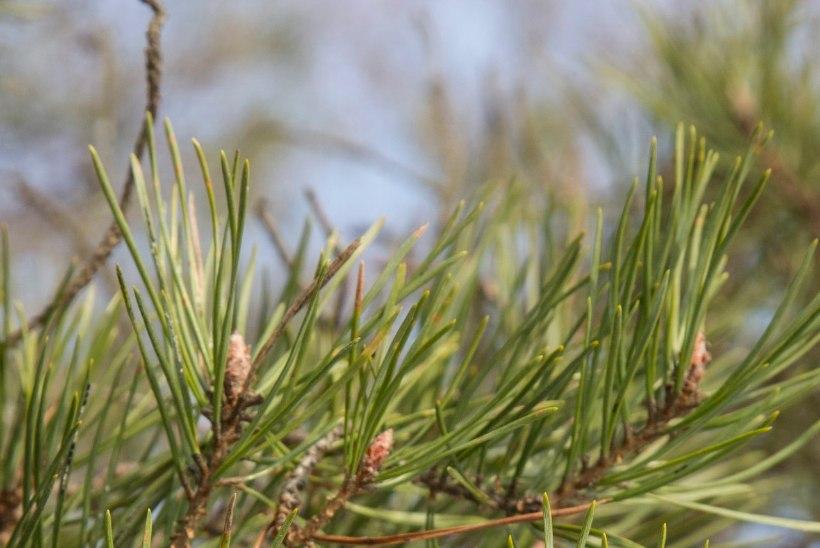 ELLUJÄÄMISTARKUSED | Taimeteed, mis kosutavad keha