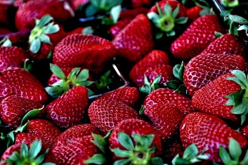 Trikk, mis toimib: kuidas hoida maasikaid kauem värskena