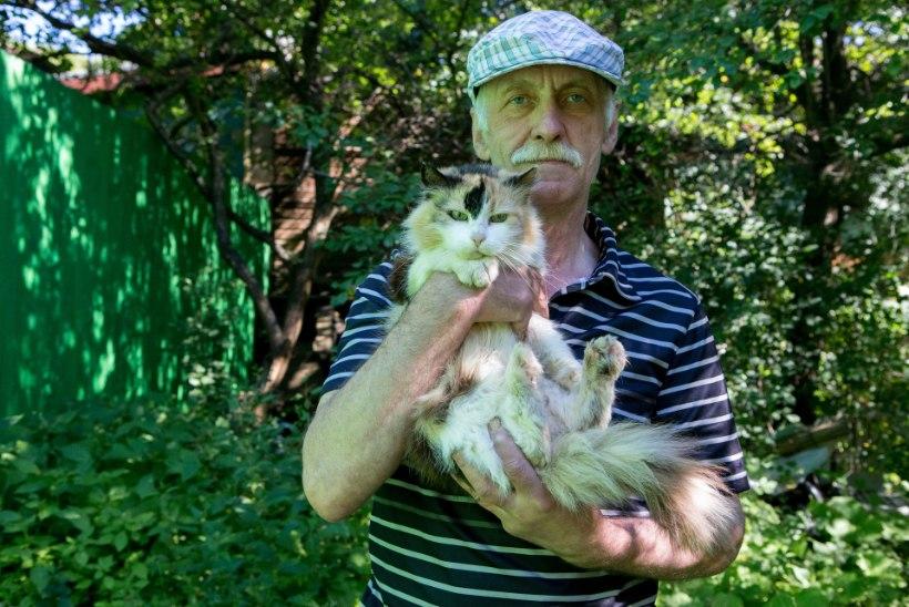 """""""Kui mul poleks olnud raha kadunud kass välja osta, kas nad olekski ta ära tapnud?"""""""