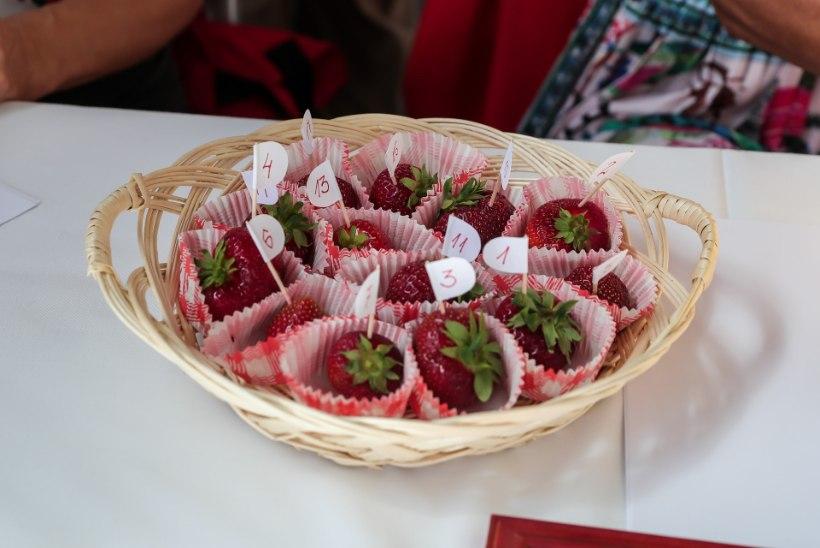 VIDEO | Getter Jaani oskab teha võrratut šokolaadi toorjuustu kooki maasikatega! Lisatud retsept.