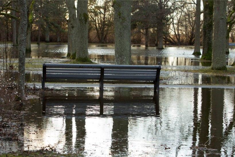 Tallinlastel palutakse üleujutusteks valmistuda, öösel jõuab äike, paduvihm ja tugev tuul
