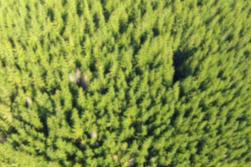 VÕIMAS TEHNOLOOGIA: droonid istutavad ühe päevaga 100000 puud