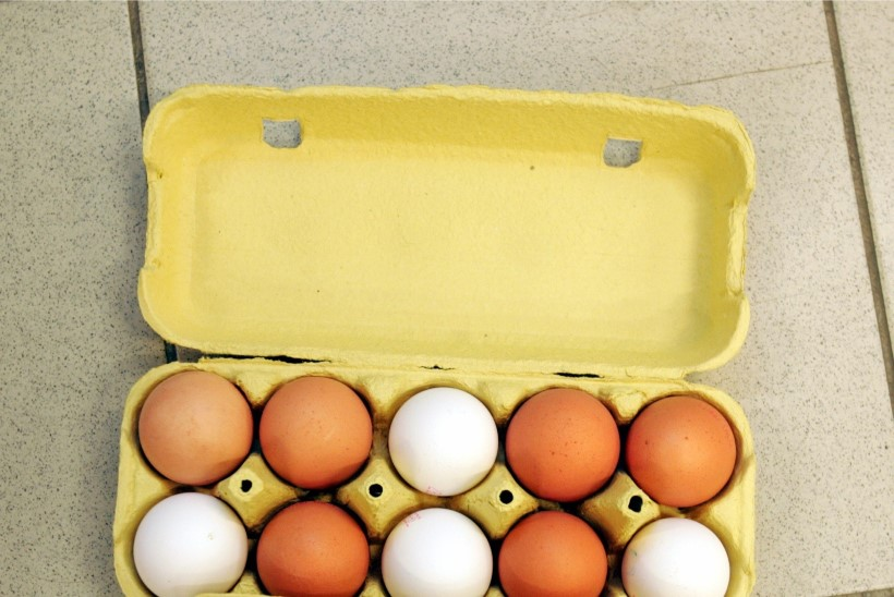MUNAPAANIKA: Loomakaitsjad kogunevad kanamunade pärast meeleavaldusele