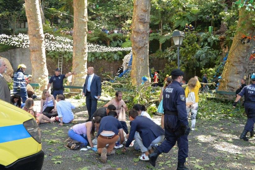 Lein: Portugal mälestab tammepuu ohvreid