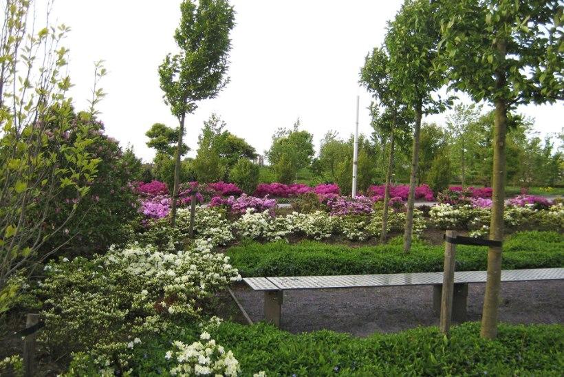 Hapulembeste taimede istutusalasid: õitsejaid jätkub siin pikalt!