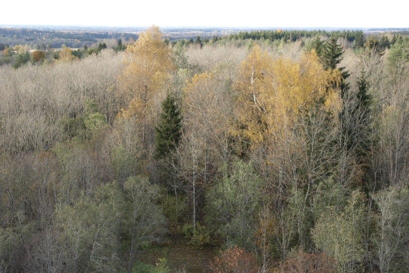 Muutus kõrgussüsteemis: Eesti mäed viskavad kõrgust juurde
