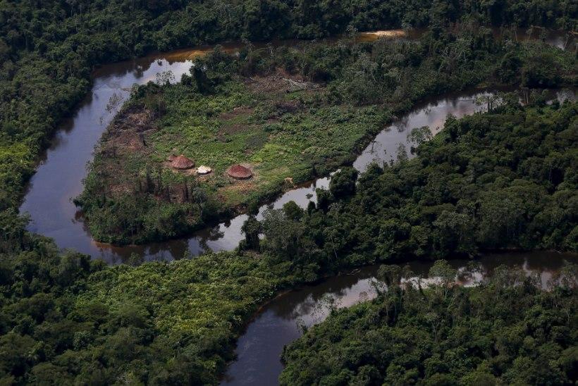 KULLA NIMEL: Brasiilia valitsus andis loa vihmametsas kaevandada