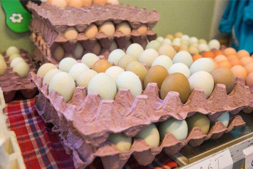 Hirmujutud kanade piinamisest on innustanud inimesi turult vabapidamisel kanade mune ostma