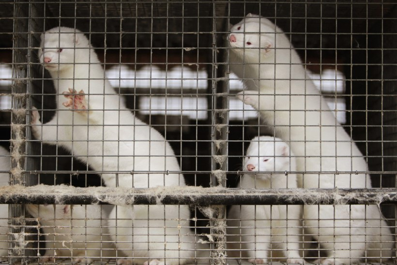 Loomade eestkostjad küsivad arvamusfestivalil: kas loomi saab päriselt aidata?
