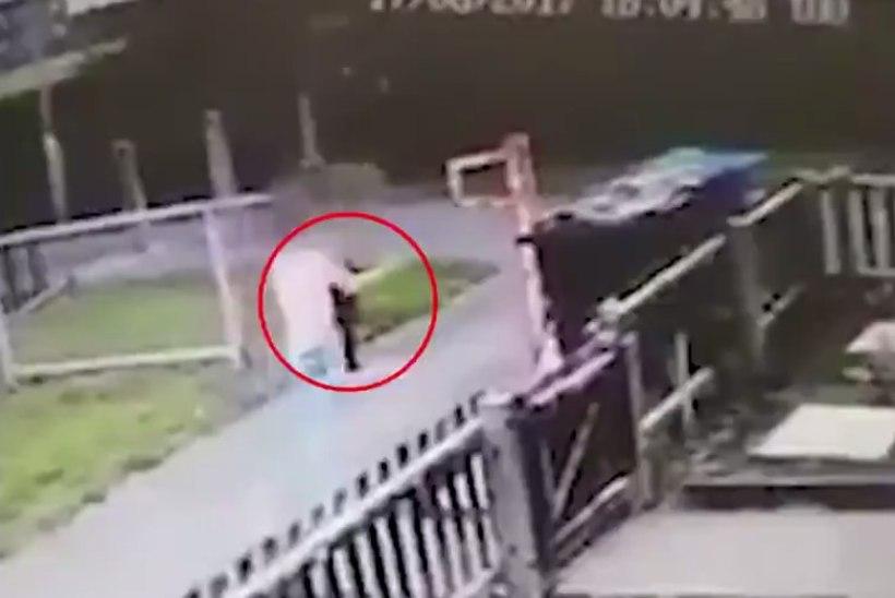 KOHUTAV VIDEO: noor tüdruk viskab elusa kassi prügikasti
