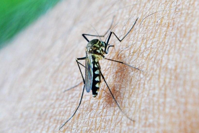 Geniaalne nipp, kuidas leevendada putukahammustuse sügelust