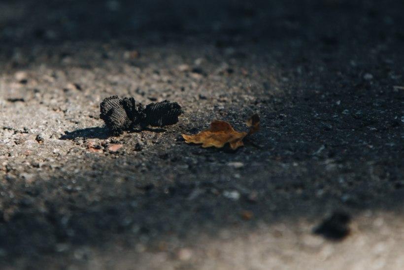 FOTOD | Roolijoodik Peeter Oja üle mõisteti kohut