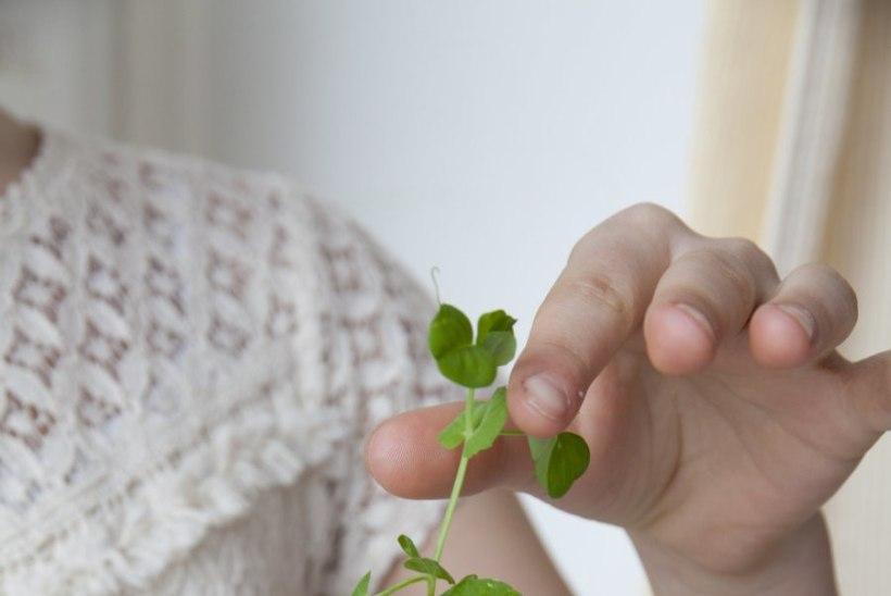 Svjata Vatra tromboonimängija tütre lemmikretsept: kartulilaevukesed