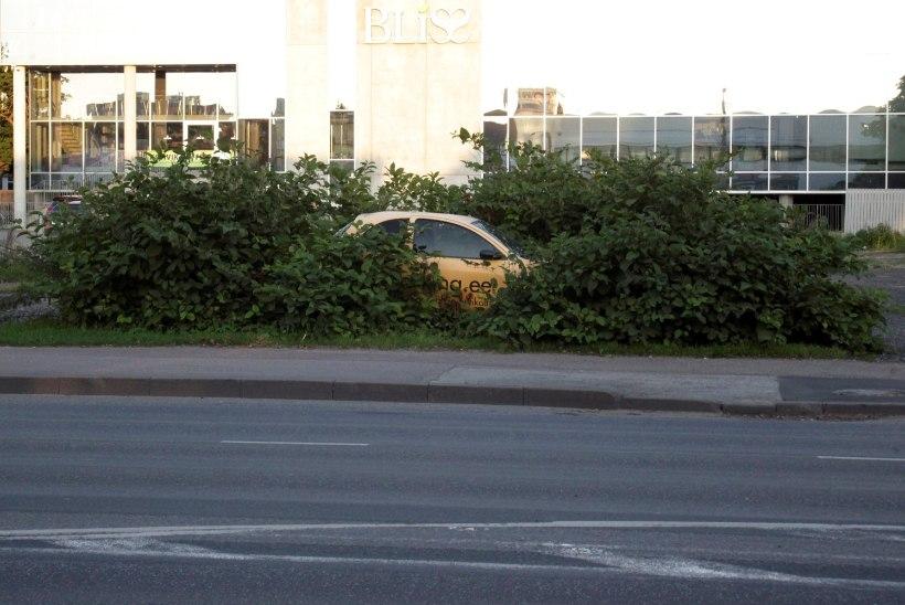PAPARATSO | Absurditeater! Kellele on mõeldud rohelised parkimiskohad?