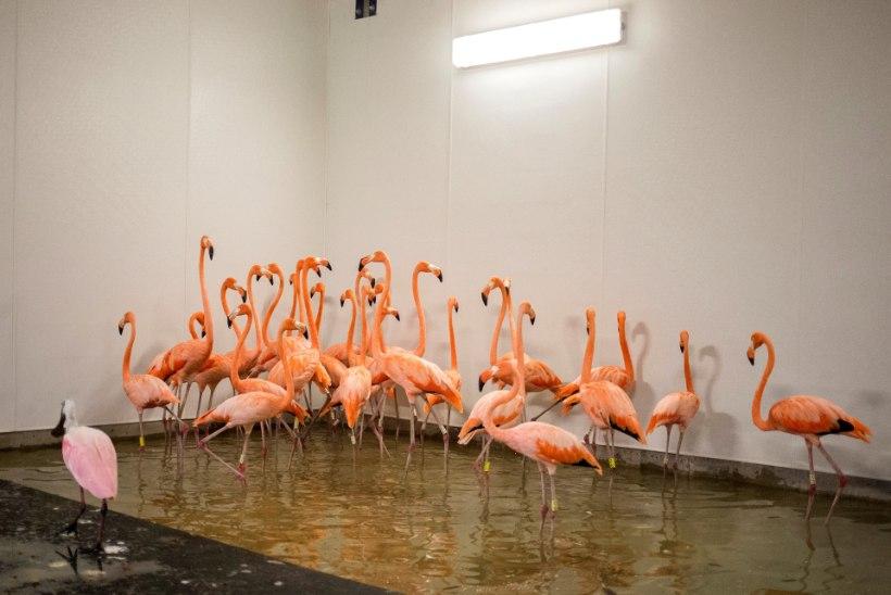 FOTOD | Kuidas valmistusid Irma tulekuks loomaaedade asukad?