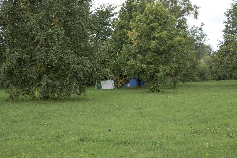Ülemiste järve kõrval suvitav Tatjana eelistab telki Lasnamäe korterile