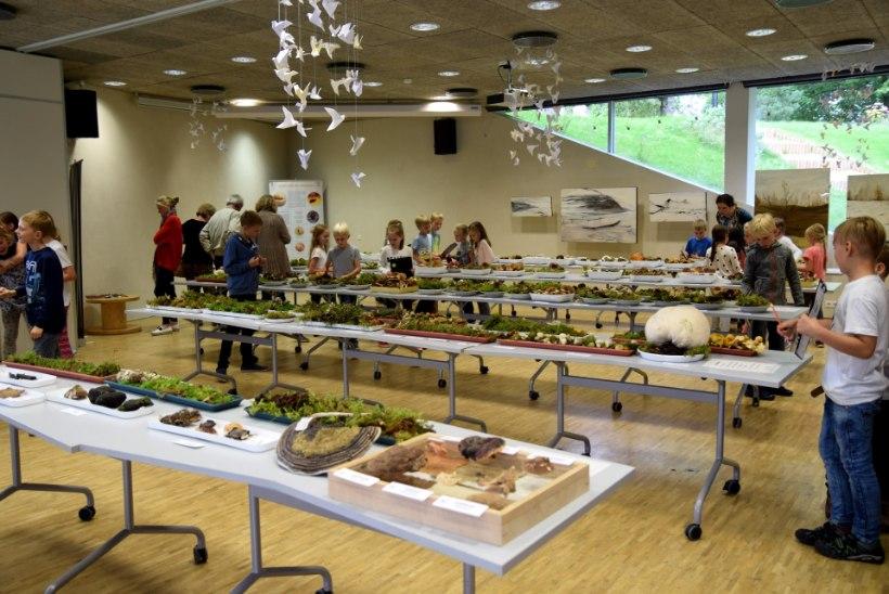 Vilets seeneaasta? Tartu loodusmaja näitusele jõudis üle 170 seeneliigi!