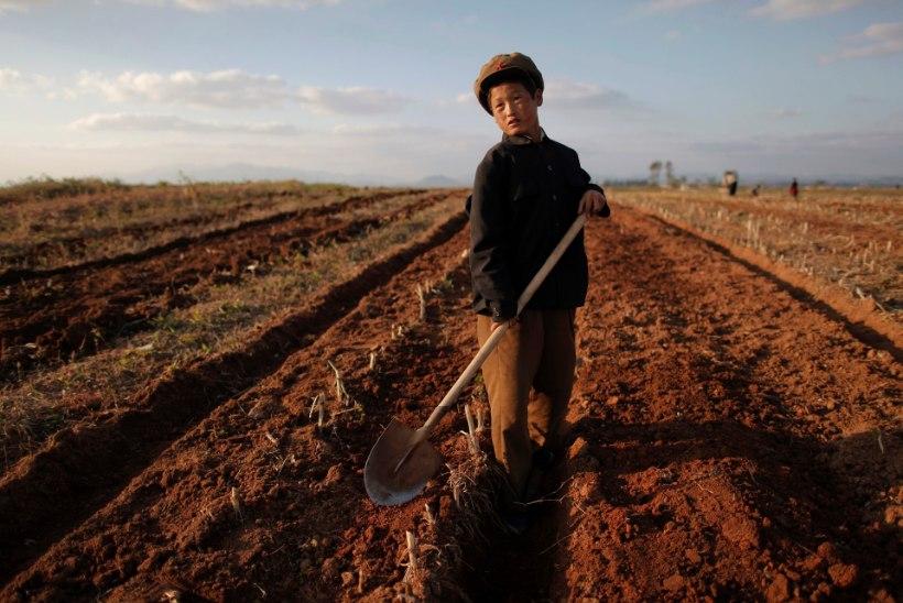 Lõuna-Korea jätkab sanktsioonidest hoolimata põhjanaabrile humanitaarabi saatmist