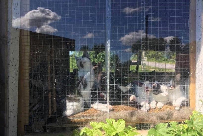 ŠOKK: Läänemaal süttis kasside hoiukodu