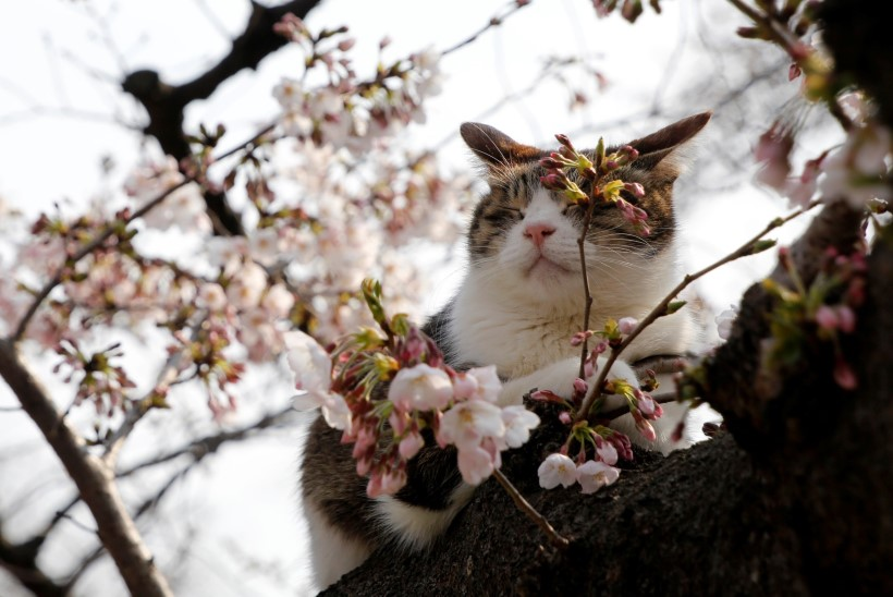 FOTOD JA VIDEO   Netis lööb laineid jumalik kass-valitseja