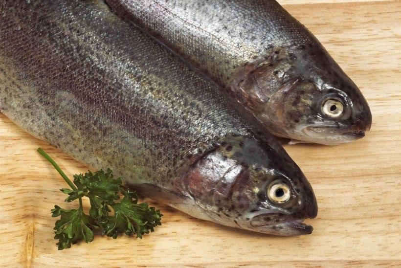 Miks kalad vahel muda järele maitsevad?