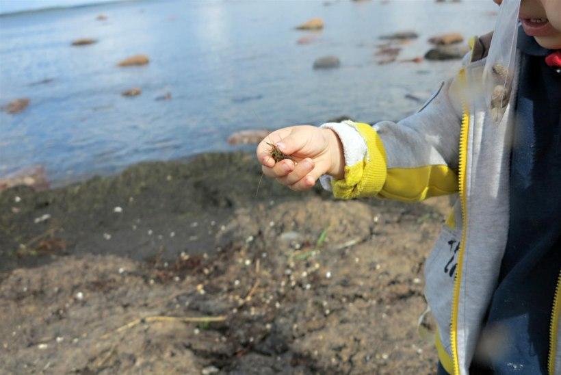 Krevetid Eesti rannikuvetes
