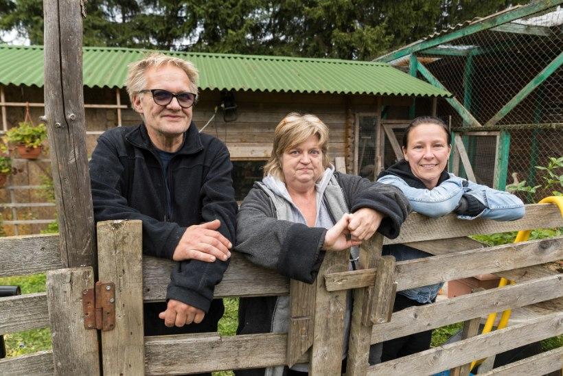 Salapärase reostusega määrdunud kured peavad talvituma Eestis