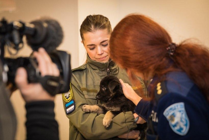 FOTOD | Eesti piirivalve ridadesse lisandusid kaks karvast ja armast liiget