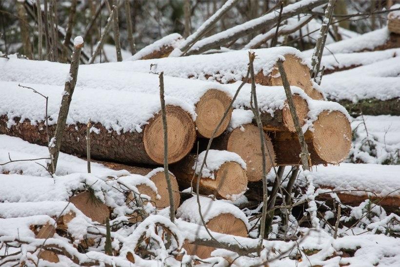 Soojast talvest märjad metsad on pelletitootjad kuivale jätnud
