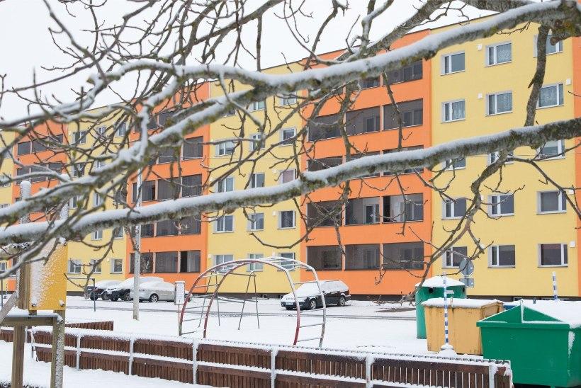 Suured puud kortermaja juures võivad ohtu seada elanike elu ja vara