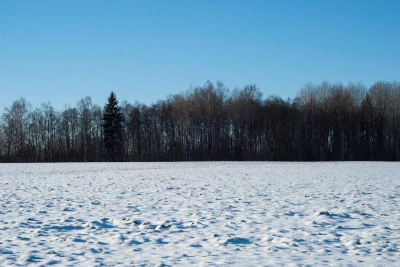 Maailm on Eesti metsade pärast mures