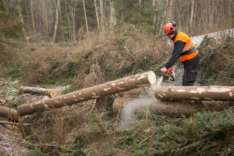 Euroopa teadlaste ühispöördumine: kliimamuutuste leevendamiseks peaksime metsa julgemalt majandama