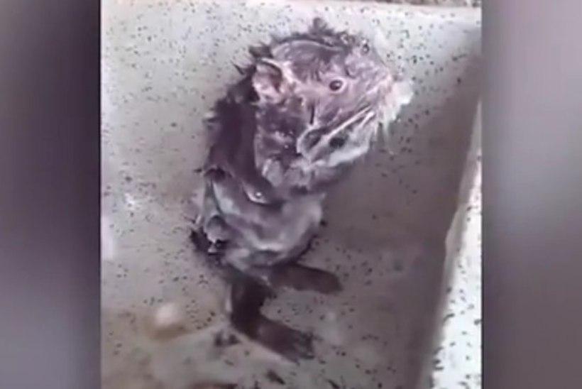 """JULM TEGELIKKUS: internetilemmik """"duširott"""" ei ole rott ega võta dušši"""