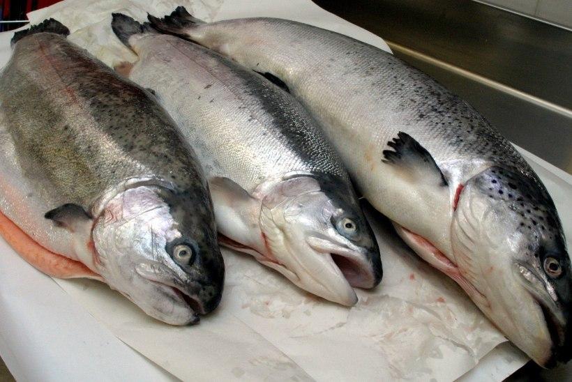 Kalamüük läks mehele kalliks maksma: loodetud kasumi asemel tuli tasuda pea 3000 eurot