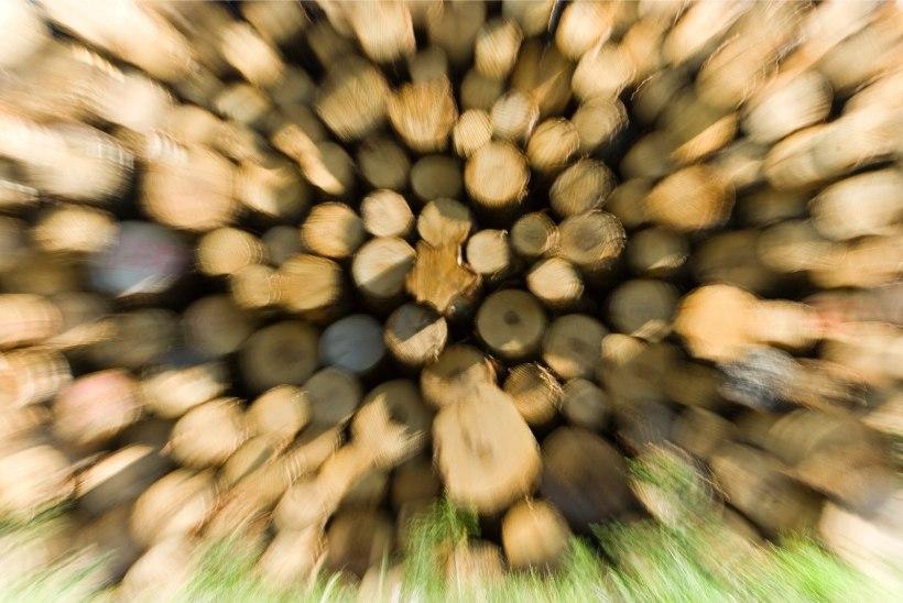 RMK lubab veel rajamata tehasele ülisuures mahus puidutarneid