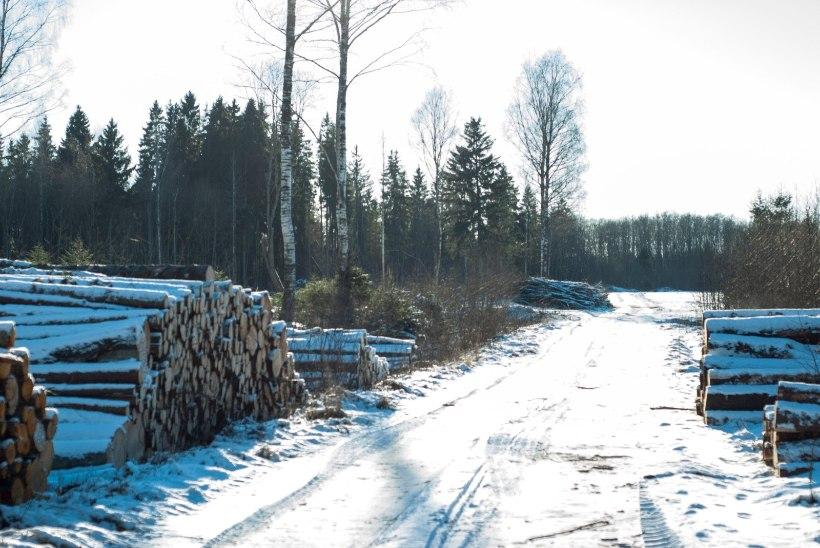 Nursipalu lageraie tõi keskkonnaametile Keskkonnakirve, amet pole sellega päri