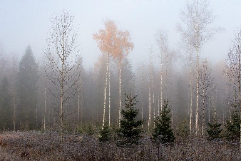 STATISTIKAAMET: eestlased on endiselt metsarahvas