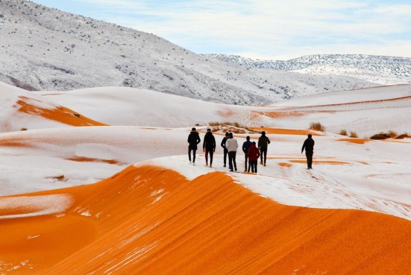 Sahara kõrbes sadas maha ligi 40 sentimeetri paksune lumevaip