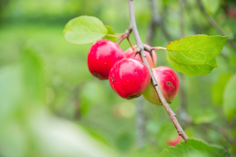 Toidutare uus nädalamenüü: õun peletab tohtri ja mekib hästi ka prae kõrval!