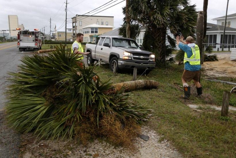 FOTOD JA VIDEOD | Orkaan Michael rebis puid nagu rohukõrsi