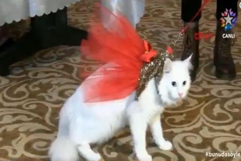 FOTOD   Kes on kõige kaunim kass? Türgis peeti rahvusvahelist kasside iludusvõistlust