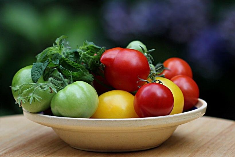 5 lihtsat nippi, kuidas saada poolvalminud tomatid punaseks