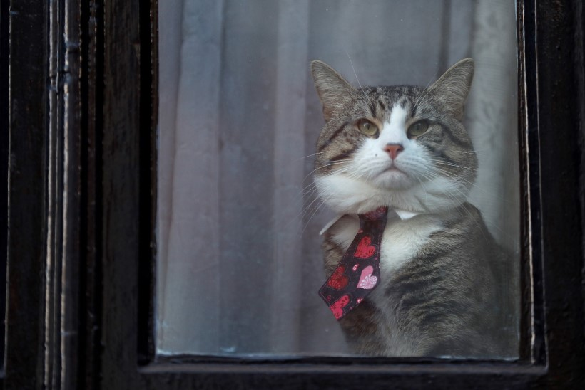 Julian Assange'il kästi oma kassi eest paremini hoolitseda