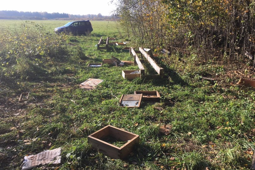 FOTO   Soomaal lammutab karu mesipuid
