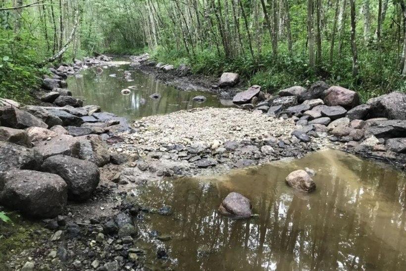 Loode-Eesti jõgedes paranesid kalade elu- ja kudetingimused