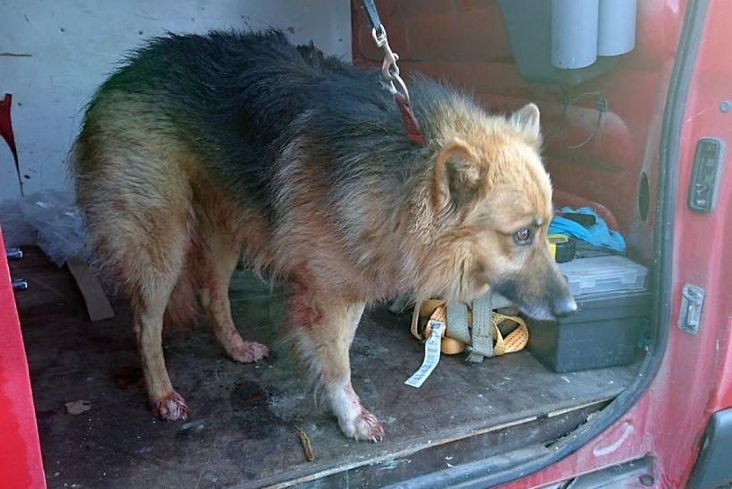 SPARTAKI LOOS ÜLLATAV PÖÖRE: koer pääses kodust jooksu